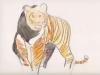 tigre-compressed